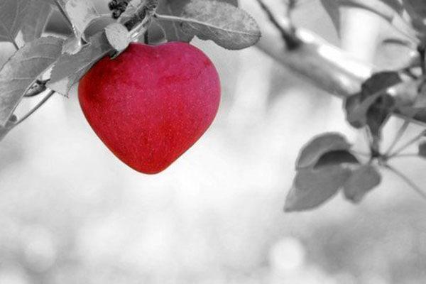 L'Amour, clé du succès
